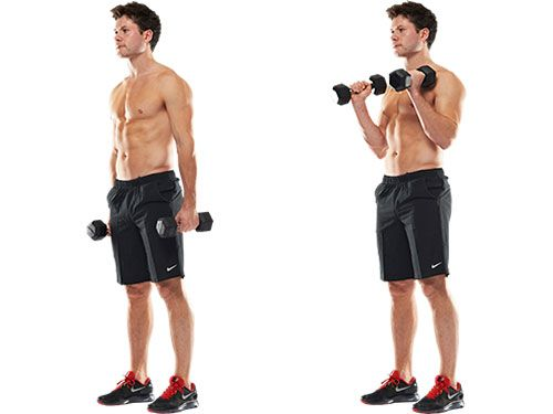 forearm hammer curls workout